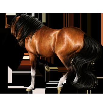 Autres Jeux Equestres En Ligne! Race_2D2_morgane