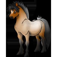Autres Jeux Equestres En Ligne! Race_2D2_poney_bairouan